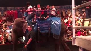 Blasian Baby Sister Rides Baby Elephant!