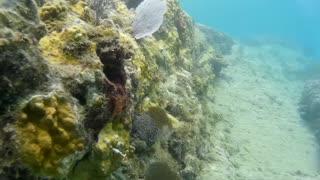 St. Kitts Snorkeling