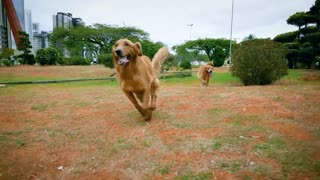 Dog Running In Epic Slow Motion