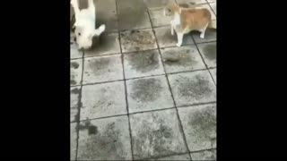 Dog Dance Funny