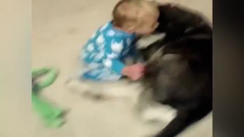 Sleepy Baby Cuddles with Husky Dog