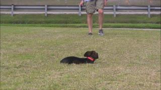 Online Dog Training Steps