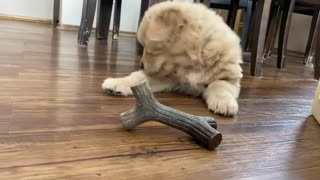 puppy playing,puppy funny videos,