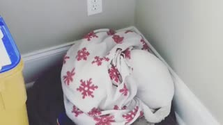 Angry dog hates everyone, hides away under blanket
