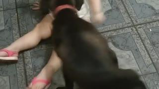 loving dog with child