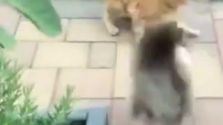 Fat cat moves like a ninja 🐈🐈🐈🐈