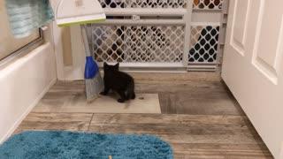 3 Kittens Playing