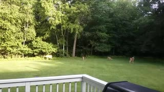 Spring 2020 Fawns