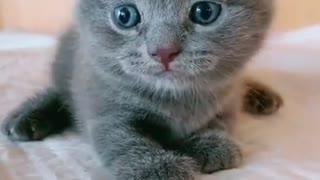Lovely Little Black Cat