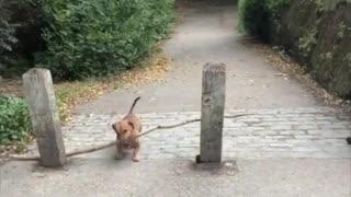 bosco and his big stick