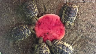 Turtles Enjoy a Nice Christmas Dinner