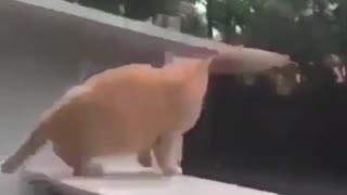 FUNNIEST CAT FAILS