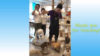 Cat Cute Pets And Funny Animals Compilation