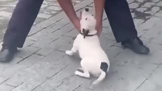 dog security guard