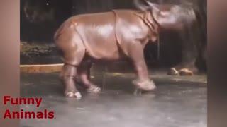 Little rhino loves water