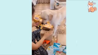 Cute Funny and Smart Dogs Compilation Cute Buddy