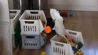 Screaming parrot)