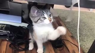 Little cat play funny