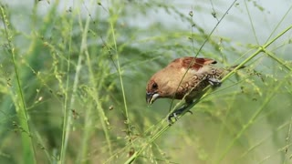Bird eating insects on a branch - With great music