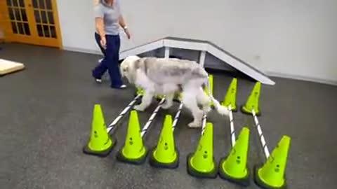 """""""Tengo más de 10 años, ya no puedo caminar""""–Dejan a su perrito de toda la vida atado a un trineo"""