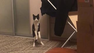 Kitty Caught Playing with Laundry