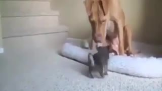 Dog Plays With Puppy