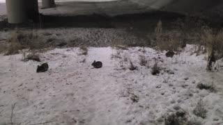 Wild Rabbit Winter Journey Day 6 Part 4