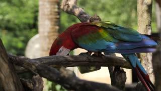 Animal ,Bird, Parrot