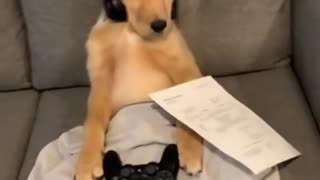 This dog gets talked into paying rent