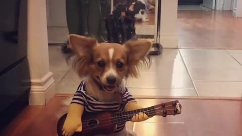 """Music-Loving Dog """"Plays"""" The Guitar For Treats"""