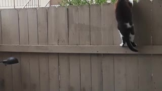 Sneaky Cat Scales Fence