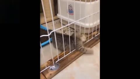 Funny Cute Pets _ You sure you will not Laugh To These Pets Compilation?