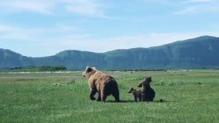 Cubs Copy Mother Bear