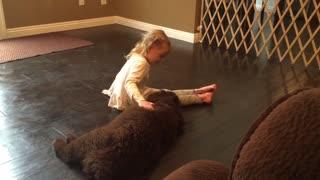 Little girl trains her gigantic Newfoundland puppy