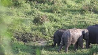 inside the elephant family jungle