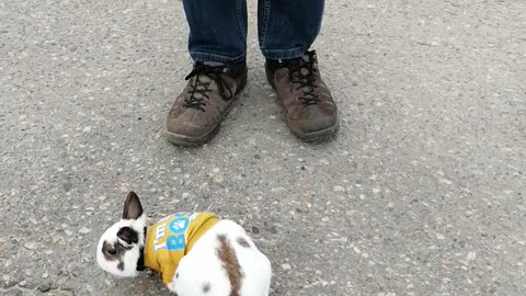 Chuck Bunny...28