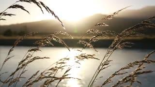Beautiful video ralaxing