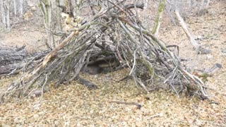 Sasquatch Shelter Structures