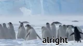 Cute Penguins having a wonderful time together