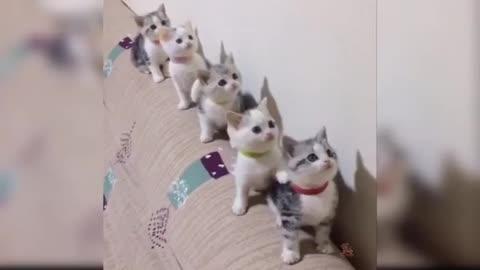 Cute kitten dacing