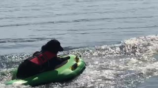 Doggy Delighted by Tubing Ride
