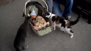 Cats meet the newborn babies of their owners, watch and enjoy their reactions