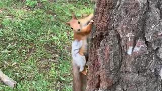 squirrel running in a tree