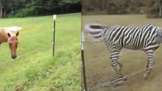 Turning a horse vidéo into a sebra vidéo