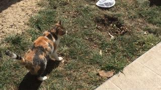 Crazy cat attacks cute puppy