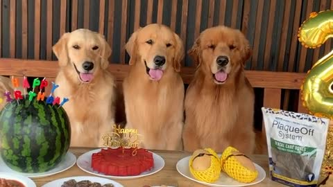 The Dog Happy Birthday Wish