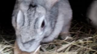 Rabbits eat