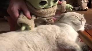 Baby Yoda loves his kitty