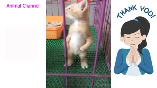 Adorable funny Pets 1