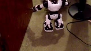 Mini Aussie puppy afraid of robot